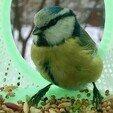 784fe6_63ed7aa15b9146d4aea75afaf25d77d1_mv2.jpg Download GCODE file Bird Feeder 4.0 • 3D printing model, printednest
