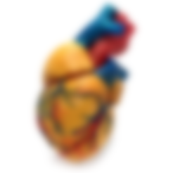 Free 3d printer model 3 colors Anatomical Heart, SidneyHuang