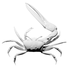 Free 3D printer model Fiddler Crab, ThreeDScans