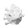 Capture d'écran 2018-09-13 à 17.11.10.png Download free OBJ file Xenophora • 3D printable design, ThreeDScans