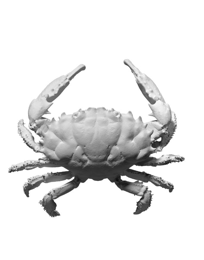 Capture d'écran 2018-09-13 à 17.27.48.png Download free OBJ file Dark Finger Reef Crab • 3D printing design, ThreeDScans