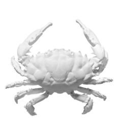Descargar Modelos 3D para imprimir gratis Cangrejo de arrecife Dedo Oscuro, ThreeDScans