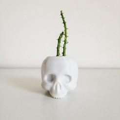 Download free 3D printing designs Skull Planter V3 - H80MM, Pierre