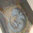 20190807_124747.jpg Download STL file Baby Dinosaur - Sleeping • 3D printable model, Think3dprint