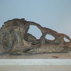 3D printer files Dinosaur Skull Eoraptor, Think3dprint