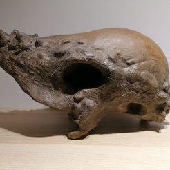 IMG_20200706_231629.jpg Télécharger fichier STL Crâne de Pachycéphalosaure • Objet imprimable en 3D, Think3dprint