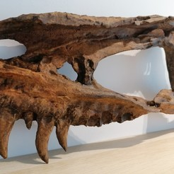"Download 3D printer templates ""Dinosaur - Nanotyrannus Skull fragment"", Think3dprint"