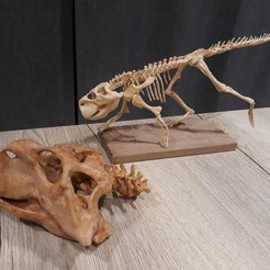 Download 3D printer designs Psittacosaurus Dinosaur , Think3dprint