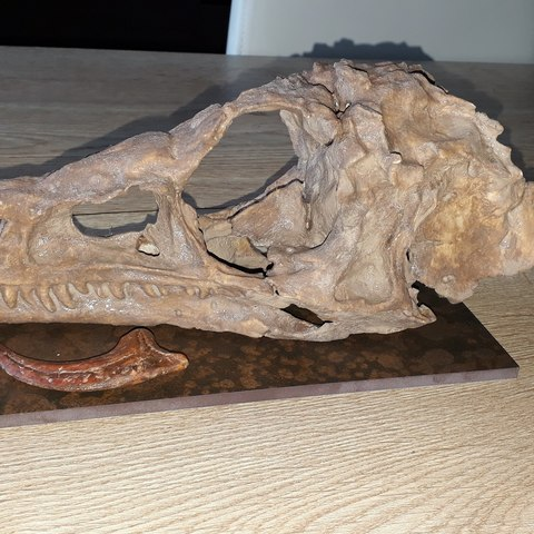 Download 3D model Dinosaur Skull Eoraptor, Think3dprint