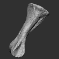 HYPA BONE1.png Download STL file Hadrosaur Metatarsal - Hypacrosaurus • 3D printing object, Think3dprint
