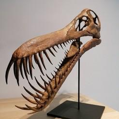 IMG_20201208_101238.jpg Télécharger fichier STL Crâne de ptérosaure - Boreopterus • Objet imprimable en 3D, Think3dprint
