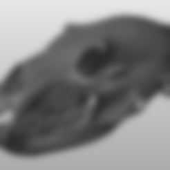 Lower jaw.stl Download STL file Bear skull • 3D print design, Wupsje