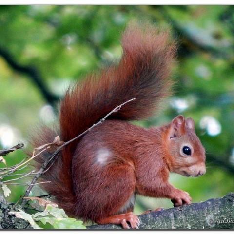Download free OBJ file squirrel • 3D printing design, Pegazepi