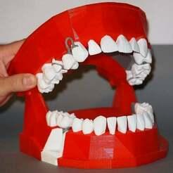 Modele_final_3_upload.jpg Download free STL file Dental Demonstration Model / Modèle de démonstration dentaire • Template to 3D print, Feataur