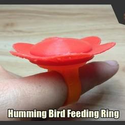 Télécharger objet 3D gratuit Anneau d'alimentation pour colibris, FunbieStudios