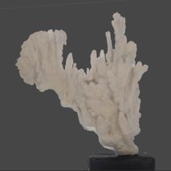 Capture 1.PNG Télécharger fichier STL Corail • Plan imprimable en 3D, augustin123