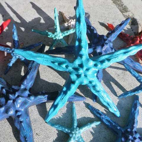 P1170101_2.jpg Download free STL file Starfish • 3D printer object, phipo333