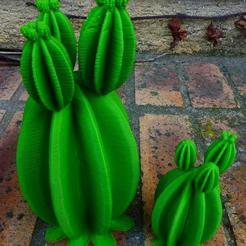 stl Cactus gratis, phipo333
