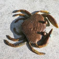 Free 3D model Crab, phipo333