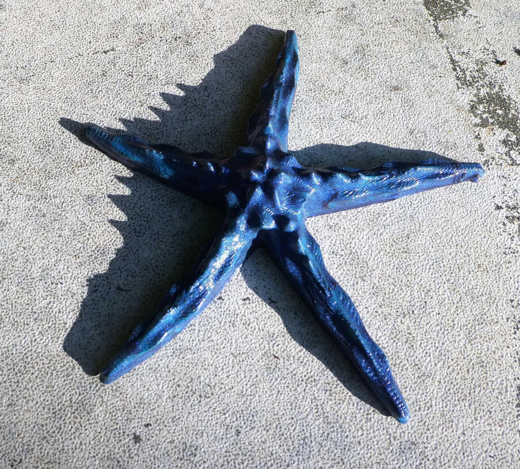 P1170095_2.jpg Download free STL file Starfish • 3D printer object, phipo333
