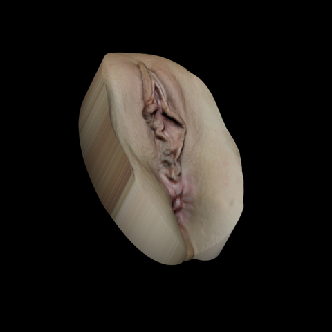 vscan2-0.png Download STL file Vagina Scan #2 • 3D printer object, 3d-v-scan
