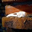 Free 3d model Boneheads: Raven - Skull Kit - PROMO - 3DKitbash.com, Quincy_of_3DKitbash