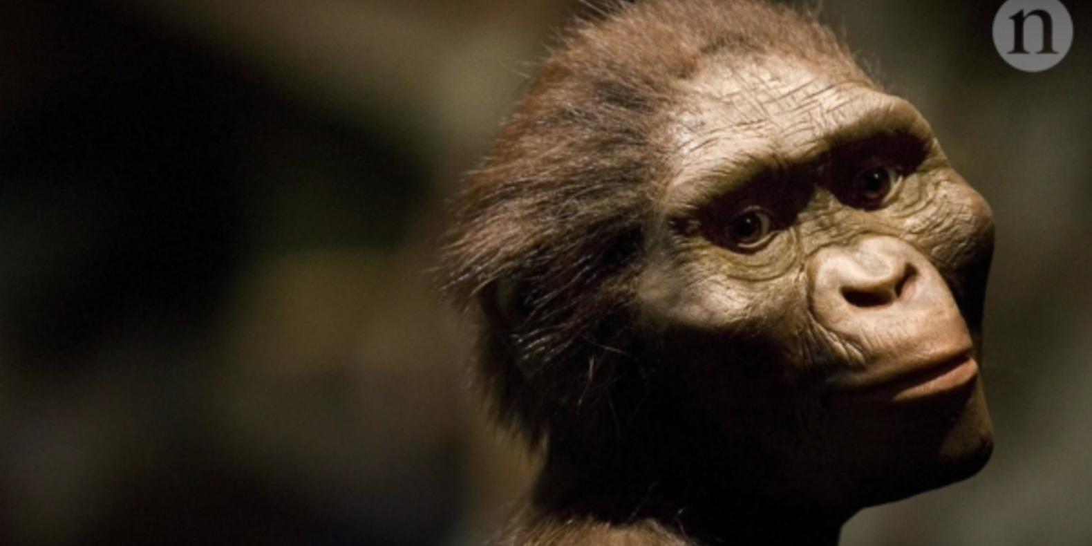 L'impression 3D pour mieux comprendre l'australopithèque Lucy