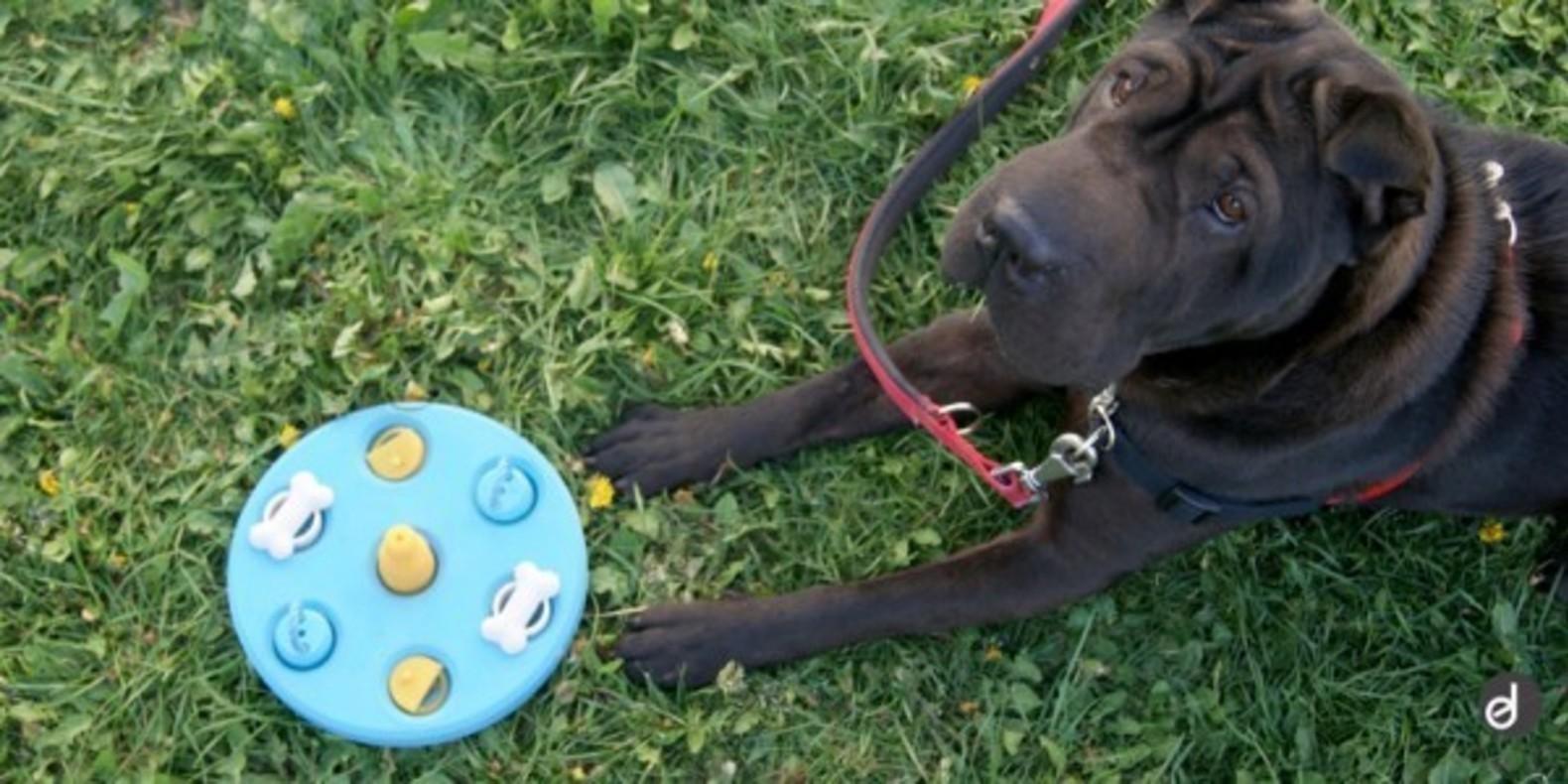 Slider-Beatriz-Dogs-Game-Cults jouet pour chiens imprimé en 3D