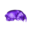 Bobcat_skull.stl Download STL file real Bobcat Skull and jaw animal reproduction • 3D printing design, Anthrobones