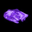 Scull.obj Download free OBJ file Lion Skull • 3D printing object, AucklandMuseum