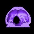 skull-bottom-back.stl Download free STL file Human skull, anatomically correct - for smaller printers • 3D printer template, firebird