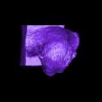 Cesar_plus_grand.stl Download free STL file Caesar • 3D printer template, CedricWeier