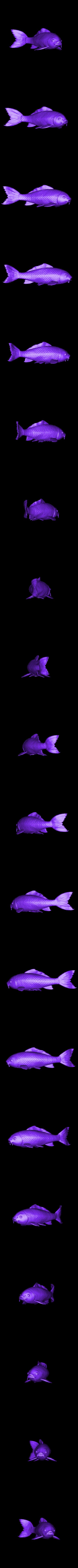 Carp_2.obj Download OBJ file Carp Fancy • Object to 3D print, Dynastinae