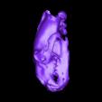 Ursus.stl Télécharger fichier STL gratuit Ursus maritimus, crâne d'ours polaire • Design imprimable en 3D, MadScientist3D