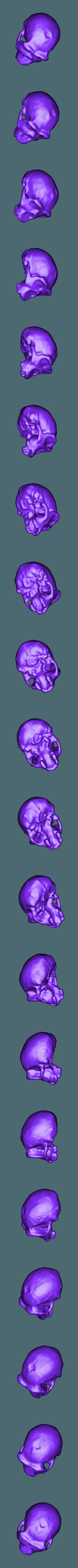 Homo_ergaster_full.stl Télécharger fichier STL gratuit Ensemble de crânes évolutifs • Objet pour impression 3D, sjpiper145