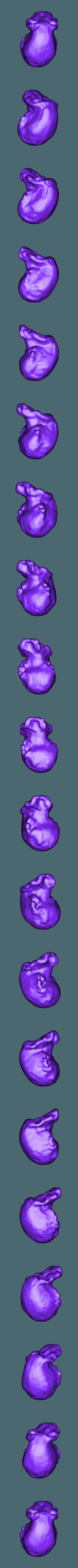 Homo_Habilis_whole.stl Télécharger fichier STL gratuit Ensemble de crânes évolutifs • Objet pour impression 3D, sjpiper145