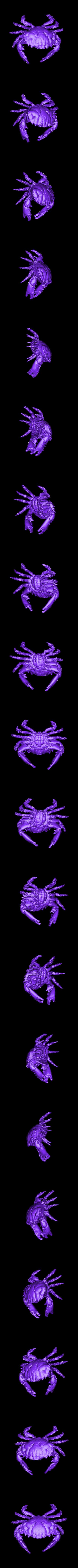 Dark_Finger_Reef_Crab.obj Download free OBJ file Dark Finger Reef Crab • 3D printing design, ThreeDScans