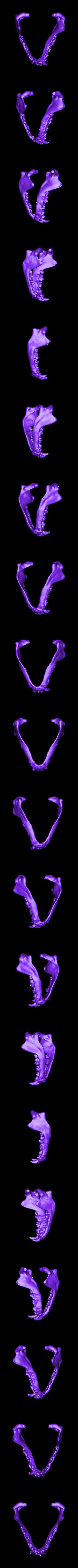 pug jaw.stl Download free STL file Pug skull • 3D printing design, voxinaudita