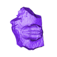 trilobite-P149623_.stl Télécharger fichier STL gratuit Trilobite (P149623) • Plan pour impression 3D, MuseumVictoria