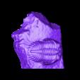 trilobite-P149623-Cut_1.stl Télécharger fichier STL gratuit Trilobite (P149623) • Plan pour impression 3D, MuseumVictoria