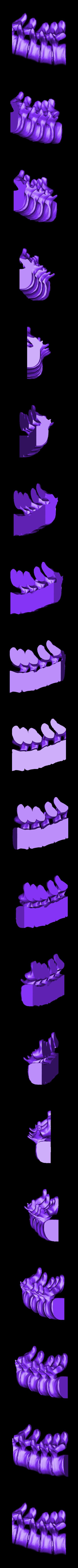 spine_bottom_left.stl Télécharger fichier STL gratuit Bougeoir pour la colonne vertébrale • Modèle pour impression 3D, billythemighty3Dprinter