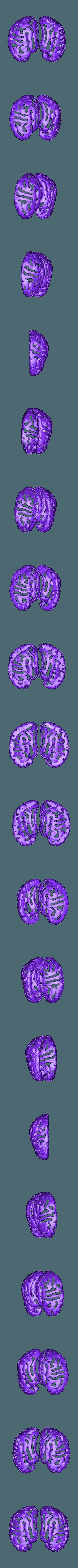 brain planter top drfempop.stl Télécharger fichier STL gratuit Jardinière de cerveau • Design à imprimer en 3D, DrFemPop