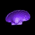 Large_Shell.stl Télécharger fichier STL gratuit Coquillage - Numériseur MultiScan • Plan pour imprimante 3D, Muzz64