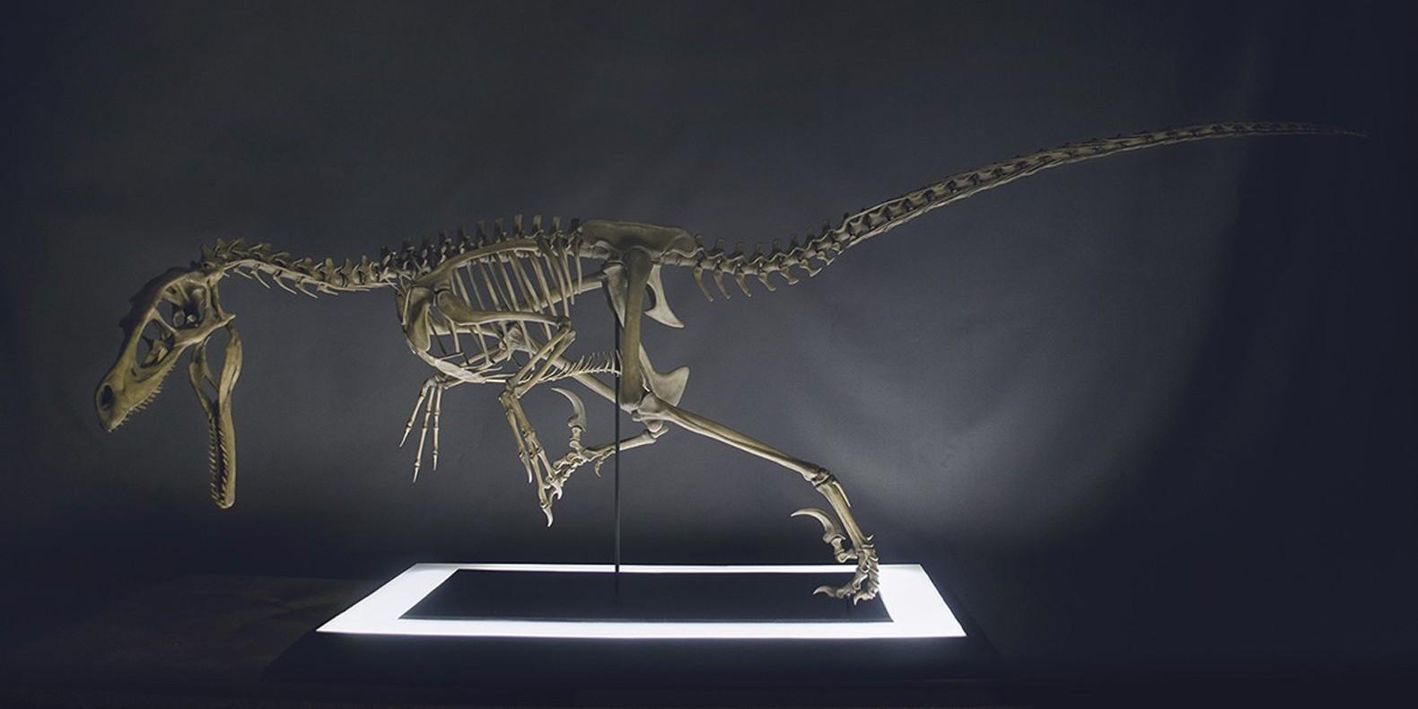 Encuentra aquí una selección de los mejores modelos 3D de dinosaurios imprimibles 3D