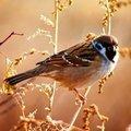 Sparrows89