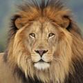 liondordesbois