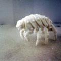 ammonite5665